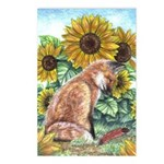 Sun Fox Postcards (Package of 8)