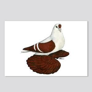 Silesian Swallow Pigeon Postcards (Package of 8)
