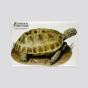 Russian Tortoise Rectangle Magnet