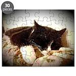 Catnap Puzzle