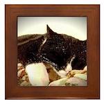Catnap Framed Tile