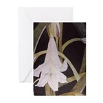 Lily Greeting Cards (Pk of 10)