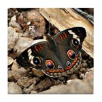 Buckeye Butterfly Tile Coaster