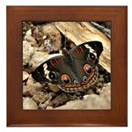 Buckeye Butterfly Framed Tile
