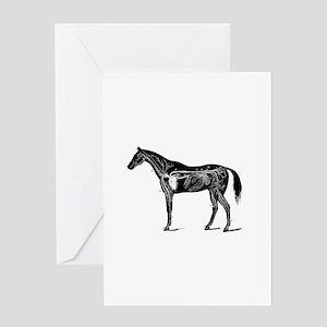 Horse's circulatory system, Anatomy Greeting Cards