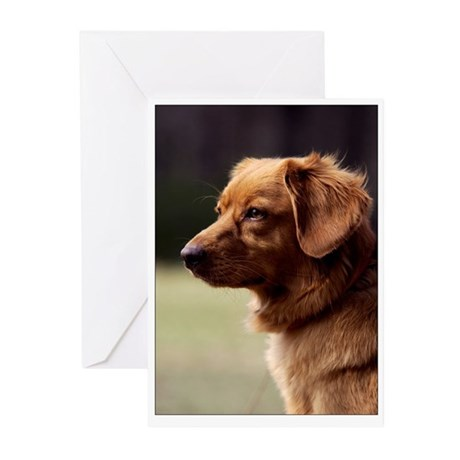 Toller in Profile Greeting Cards