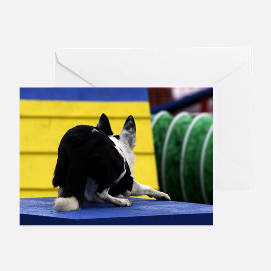 Crouching Agility Border Collie Greeting Cards