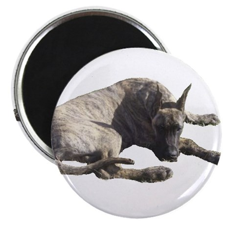 Brindle Great Dane Products Magnet