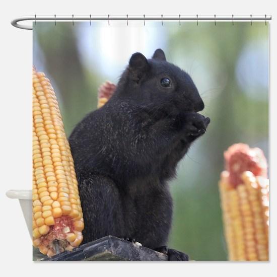 Black squirrel Shower Curtain