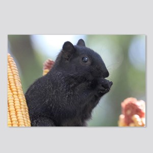 Black squirrel Postcards (Package of 8)