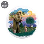 St Francis - Sphynx (fawn) 3.5