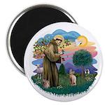 St Francis - Sphynx (fawn) Magnet