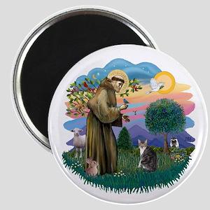 St Fran (f) - Tabby & White Magnet