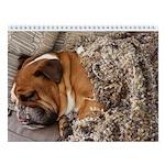 "Bulldog Wall Calendar ""A"""