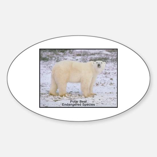 Polar Bear Photo Oval Decal