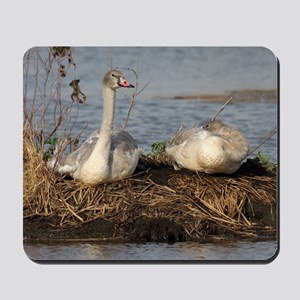 Young Swans, Mousepad