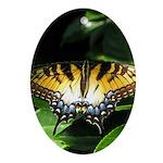 Tiger Swallowtail Resting Oval Ornament