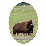 Bison Behind Fence Oval Ornament