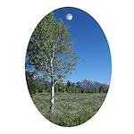 Teton Birches in Field Oval Ornament