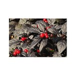 Black Pearl Peppers Horizontal Magnets (100)
