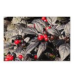 Black Pearl Peppers Horizontal Postcards (8)