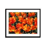 Orange Tulips Framed Panel Print