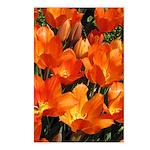 Orange Tulips Vertical Postcards (8)