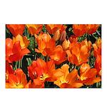Orange Tulips Horizontal Postcards (8)