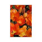 Orange Tulips Vertical Magnets (100)