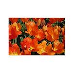 Orange Tulips Horizontal Magnets (10)