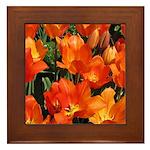 Orange Tulips Framed Tile