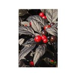 Black Pearl Peppers Vertical Magnets (10)