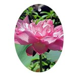Pink Lotus Oval Ornament