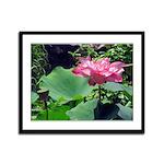 Pink Lotus Framed Panel Print