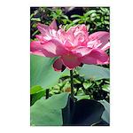 Pink Lotus Vertical Postcards (8)