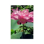 Pink Lotus Vertical Magnets (10)