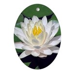 White Lotus Oval Ornament