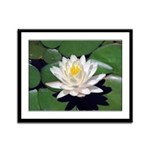 White Lotus Framed Panel Print