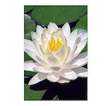 White Lotus Vertical Postcards (8)