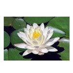 White Lotus Horizontal Postcards (8)