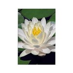 White Lotus Vertical Magnets (100)