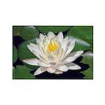 White Lotus Horizontal Magnet