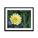 Yellow Wildflower Framed Panel Print