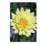 Yellow Wildflower Vertical Postcards (8)