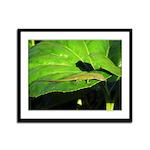Green Anole on Leaf Framed Panel Print