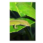 Green Anole on Leaf Vertical Postcards (8)