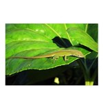 Green Anole on Leaf Horizontal Postcards (8)