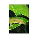Green Anole on Leaf Vertical Magnets (100)