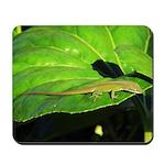 Green Anole on Leaf Mousepad