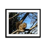 Squirrel in Autumn Framed Panel Print